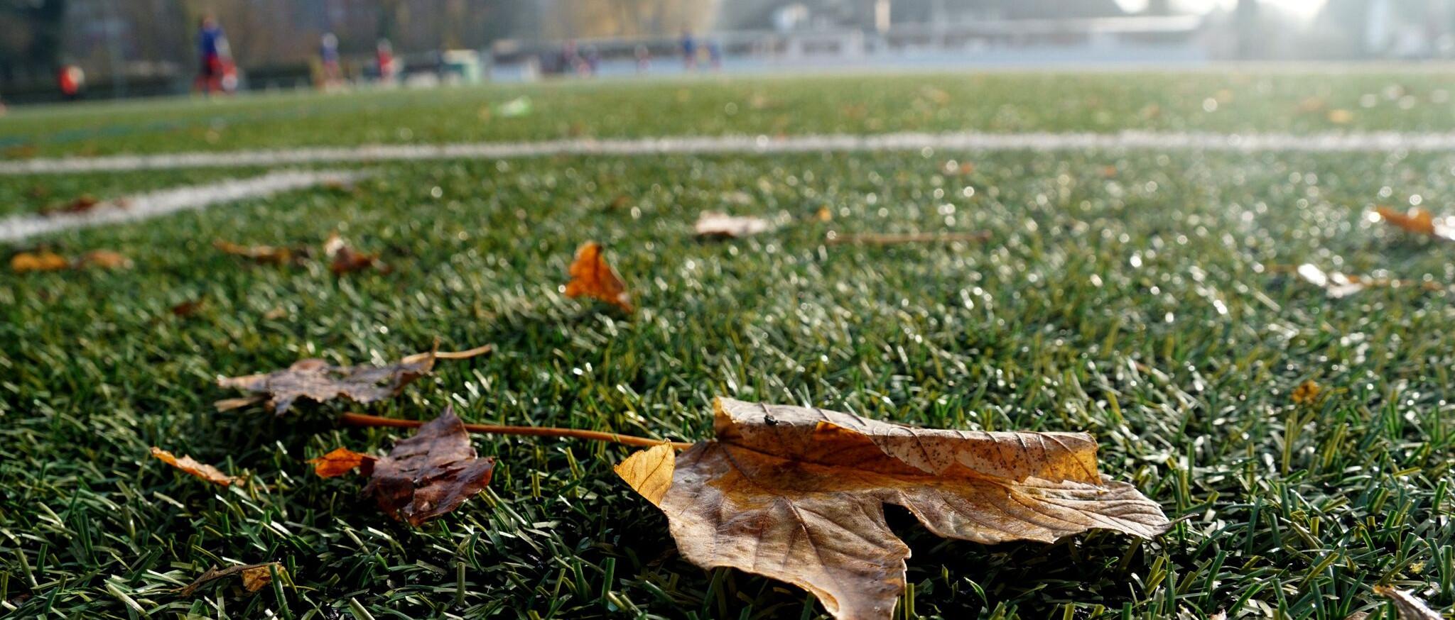 Ein Herbst der Staffelsiege